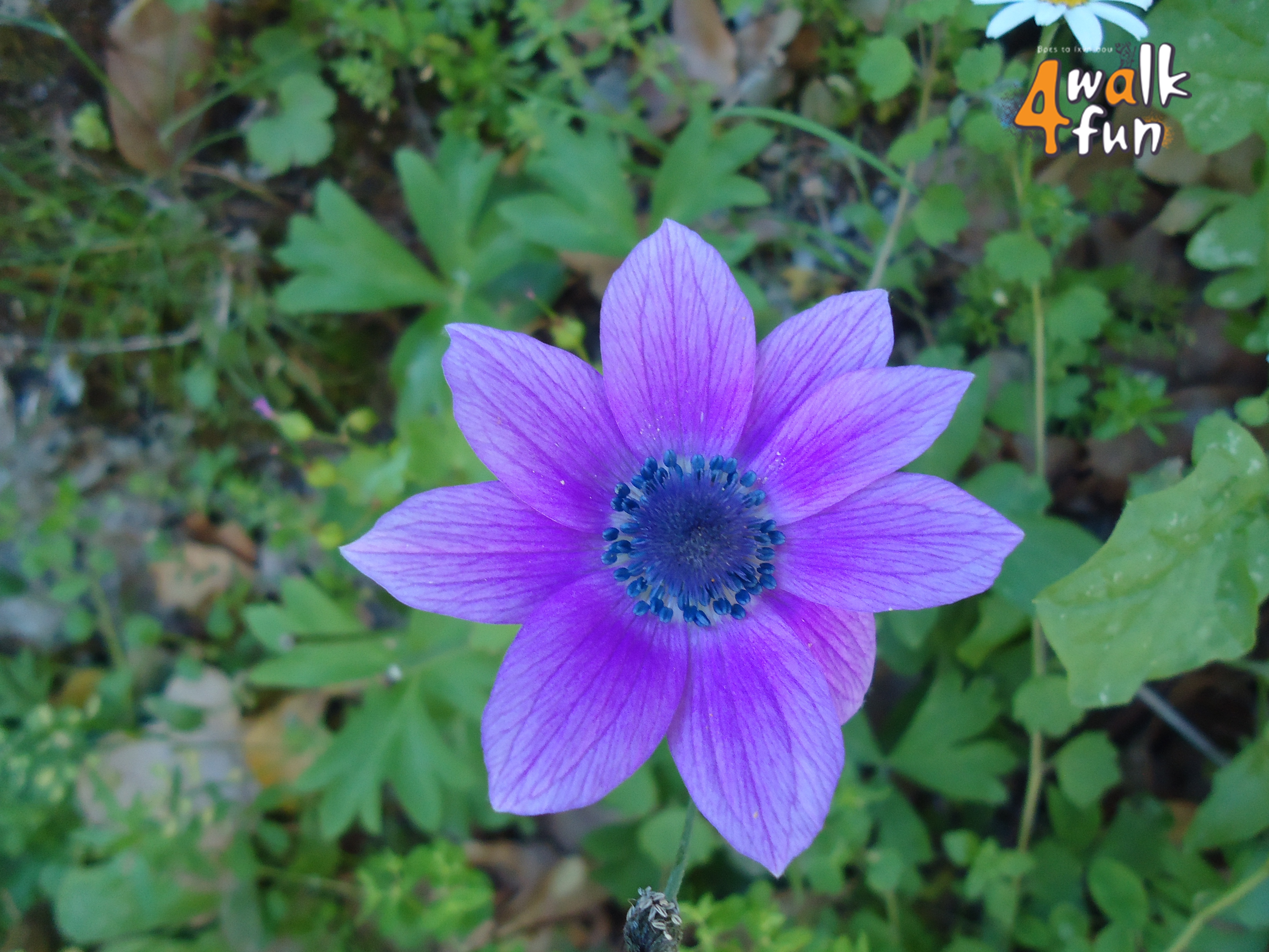 Gemütlich Frühling Färbung Aktivitäten Bilder - Malvorlagen-Ideen ...