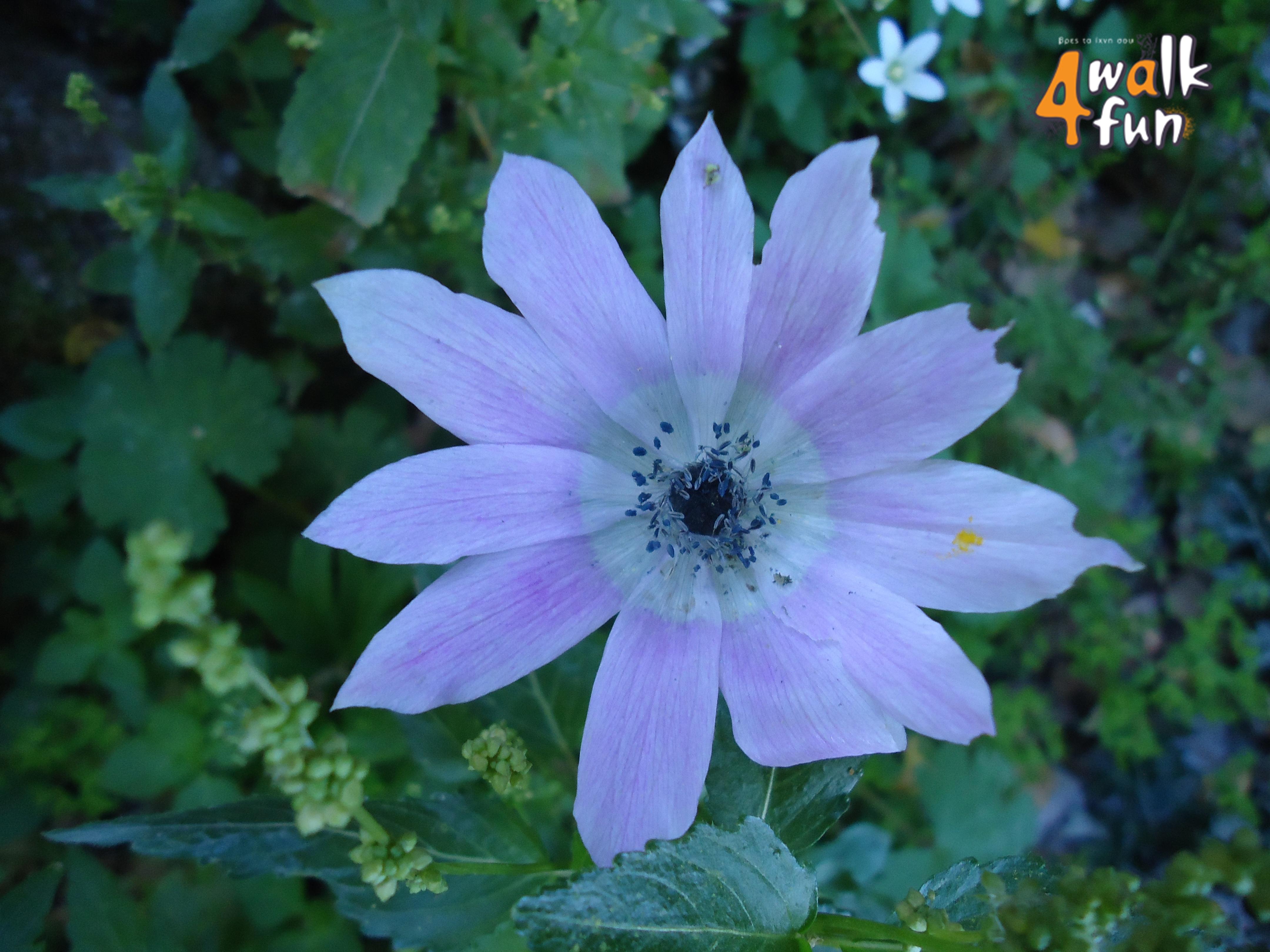 Wunderbar Frühling Färbung Bilder Fotos - Framing Malvorlagen ...